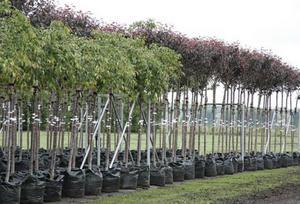 Основные правила посадки деревьев