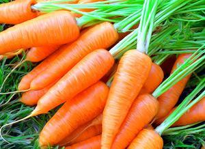 Как сажать морковь семенами в открытом грунте видео