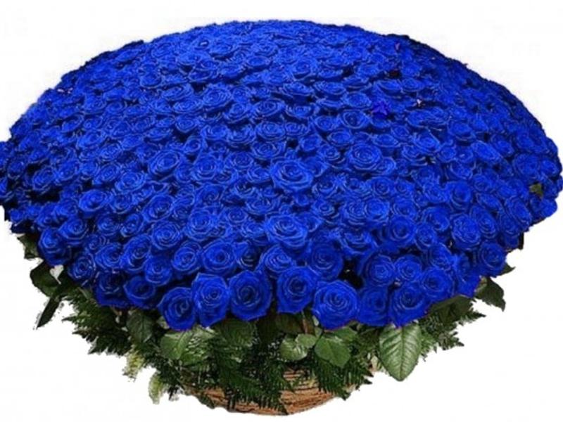 Картинки букет синих роз