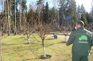 Описание способа предохранения яблонь от вредителей