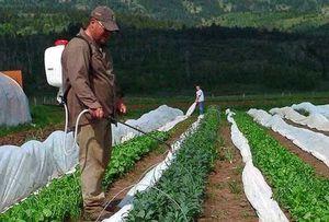 Описание способов предотвращения заболеваний гороха и защита от вредителей