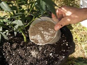 применение фосфорного удобрения