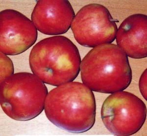 анис яблоко фото