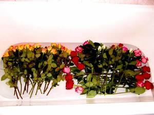 Сохраняем резанные розы