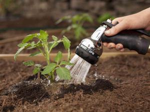 Как правильно использовать подкормку для рассады перцев и томата