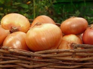 Уборка урожая и рекомендации как лучше хранить лук