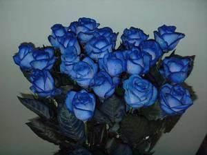 фото букеты синие розы