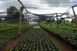 Рекомендации для выращивания рассады капусты в тёплых условиях