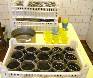 Подготовительные действия перед посевом семян баклажан