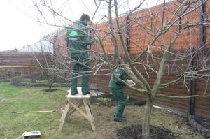 Уход за молодыми деревьями