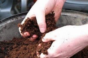 Правильная подготовка грунта для капусты