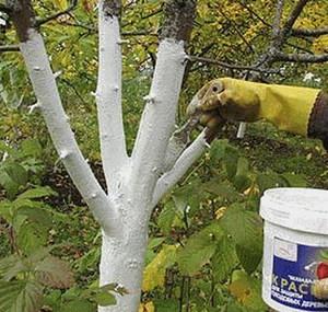 Перечень необходимых действий для ухода за яблоней весной