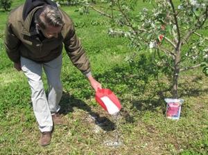 Инструкции садоводов для правильного удобрения яблонь