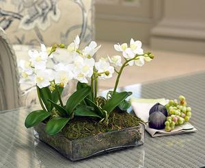 Как пересаживать орхидею в домашних
