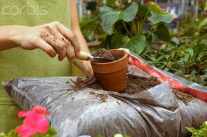 Сенполия уход и выращивание