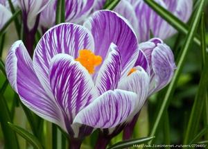 Способы посадки цветов весной