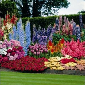 Как посадить весной цветы