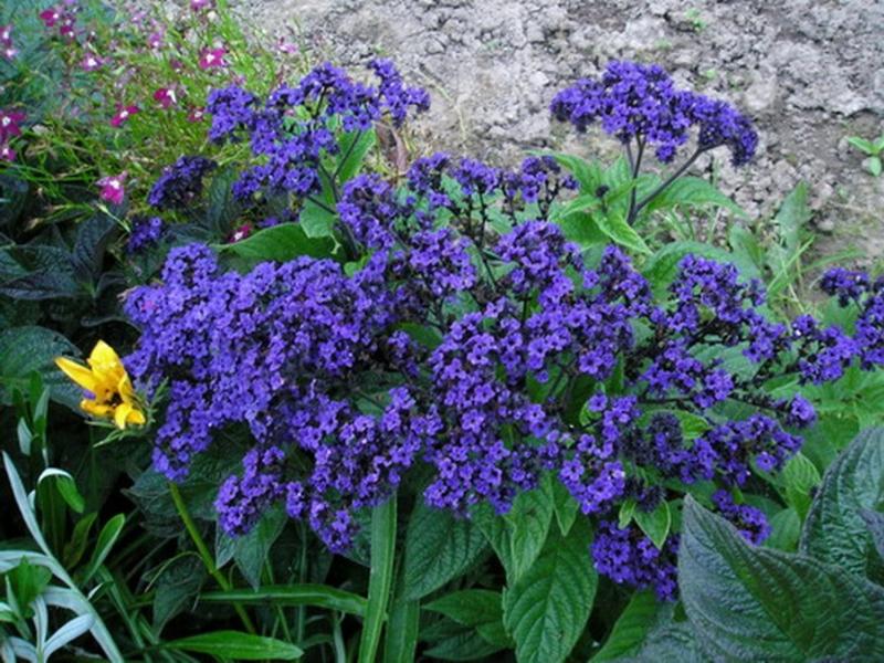 Садовый цветы для оформления