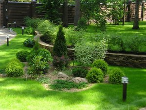 Описание применения садовых кустарников