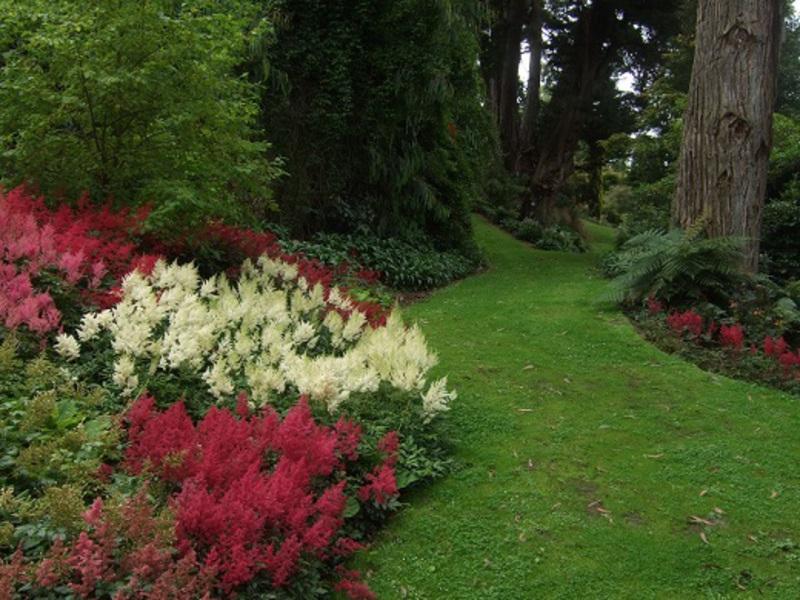 Фото астильбы в дизайне сада