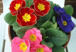 Общее описание цветка