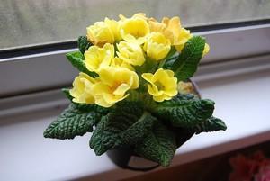 Описание видов размножения цветка