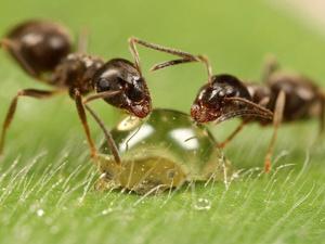 Описание физических особенностей муравьёв