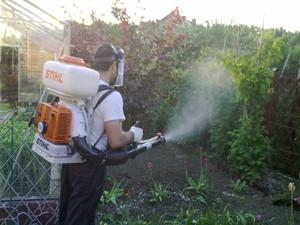 Перечень способов ликвидации садовых муравьёв