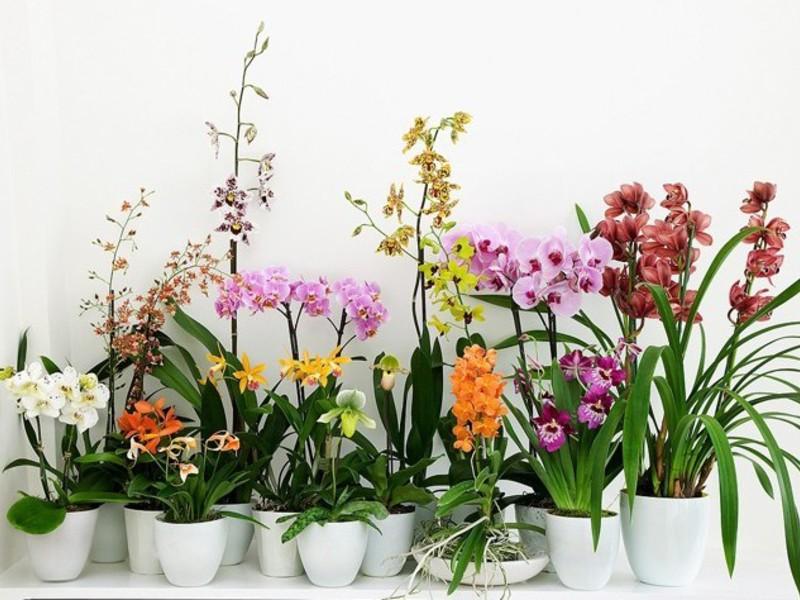 Почему у орхидеи мелкие цветы