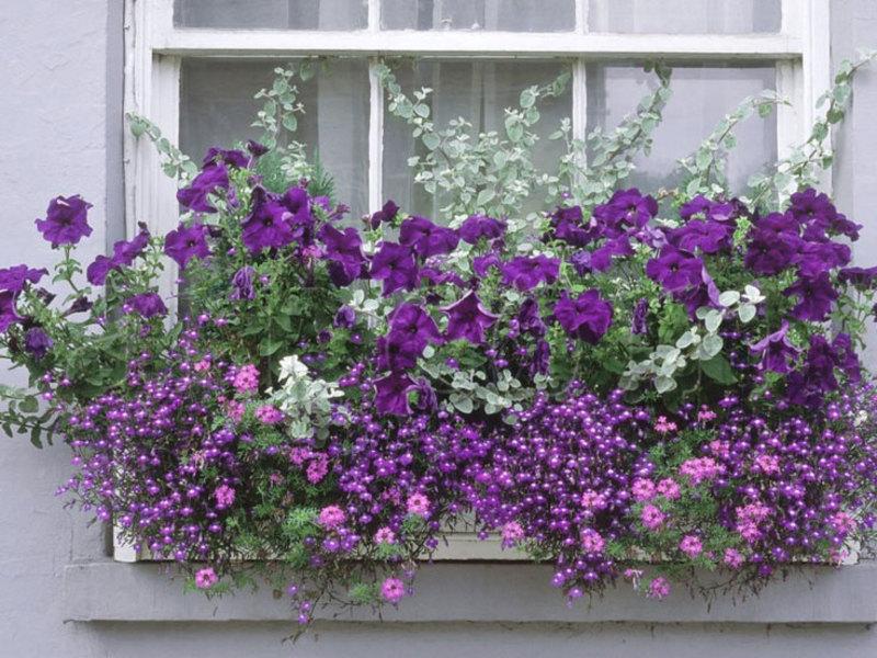 Ооо весна уличные ампельные цветы для балкона.