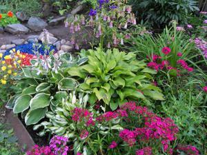 Многолетние цветы для клумбы. Фото цветов для клумбы