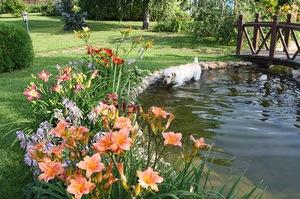 Куст лилейника прекрасно смотрится рядом с водоемом