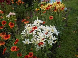 Белые цветы лилейника прекрасно смотрятся с красными яркими цветами