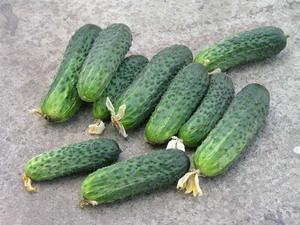 Какой сорт огурцов является самым урожайным и популярным у дачников? Скорость роста и параметры плодов самых популярных сортов