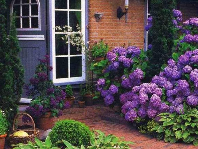 Какие посадить цветы во дворе частного дома