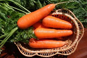 какие сорта моркови есть фото